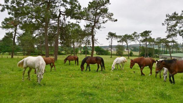 chevaux au gite run vraz